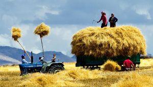'Türkiye gıda ve üretim kriziyle karşı karşıya'