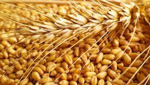TMO buğday alımı için ihale açtı