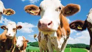 Canlı Hayvan ve Hayvansal Ürün Fiyatları ve Üretim Değeri, 2018