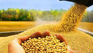 FAO, Gıda Fiyat Endeksi Verilerini Paylaştı