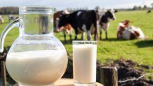 Süt ve Süt Ürünleri Üretimi, Şubat 2019