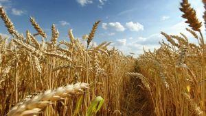 Tarımda üretim maliyetleri arttı