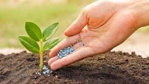 Zamlardan beli bükülen çiftçi, gübre kullanımını azalttı