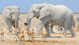 Bütçe ve Beyaz Filler