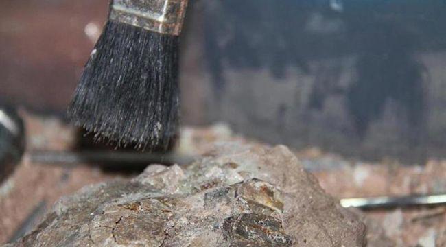 Çin'de 300 bin yıllık insansı fosili bulundu
