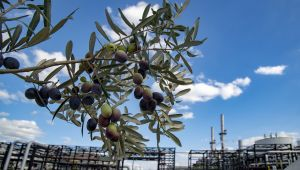 Tüpraş, BiZeolCat Horizon2020 Projesi ile Petrol Endüstrisine Katkıda Bulunuyor