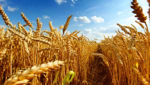 Rusya, başta Türkiye'ye olmak üzere 3.77 milyon ton tahıl ihraç etti'