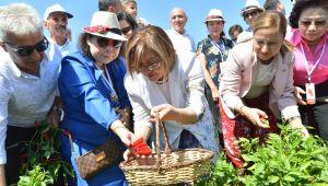 Başkan Şahin, GastroAntep Festivali'nin açılışını biber hasadı ile yaptı