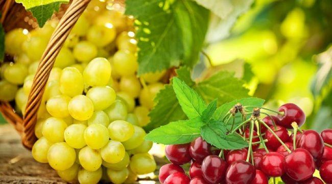 Türk yaş meyve sebze ihracatçıları Rusya'da liderliği geri almak istiyor