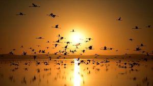 Küresel iklim değişikliği göçmen kuşları da etkiledi