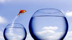 Büyümeye Dönüşün Maliyeti