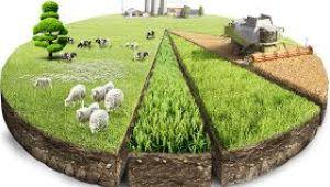 Hazineye ait atıl tarım arazileri, kullanıma açılacak