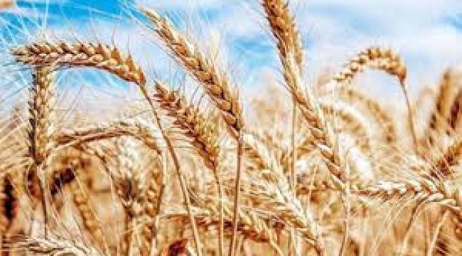 Yoksul ülkeler için 'gıda krizi' uyarısı
