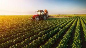 Tarımda ithalata bağımlı ülkelere FAO'dan önemli uyarı