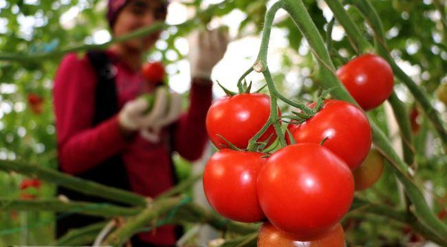 Rusya, domates kotasını kaldırmayı tartışıyor