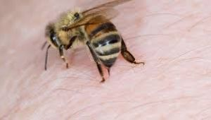 Türkiye'de üretimine başlanan arı zehrinin kilogramı 700 bin liraya satılıyor