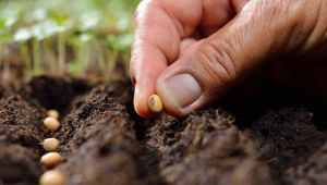 Bakanlıktan tohuma yüzde 20 zam