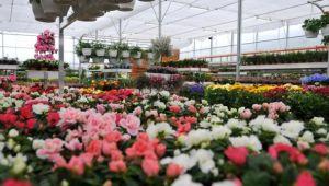 Salgında çiçek üreticileri endişeli