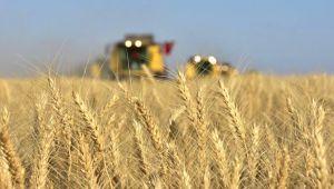 Küresel gıda fiyatları 3 yılın zirvesini gördü