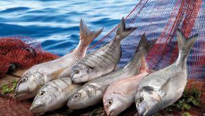 Birleşmiş Milletler 2022 yılını Balıkçılık ve Su Ürünleri Yılı ilan etti