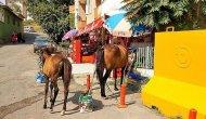 Aç kalan atlar şehri altüst etti