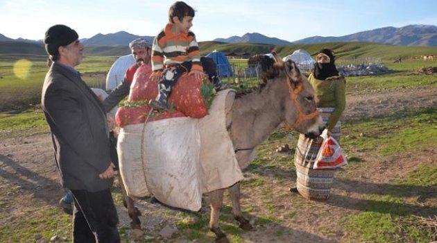 Dağdan eşekle taşınan gülbahar bitkisi kamyonlarla batıya gönderiliyor