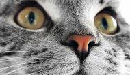 Kedi tırmalaması ereksiyonu engelleyebiliyor