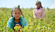 Şanlıurfalı tarım işçilerinin çocukları okumak istiyor
