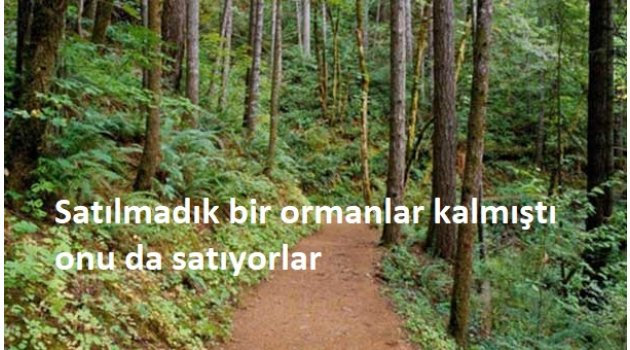Satılmadık bir ormanlar kalmıştı onu da satıyorlar