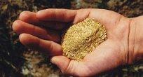 250 milyar dolarlık altın toprak altında kuzu kuzu yatıyor!