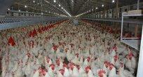 58 ülke Türk tavuğu tüketiyor