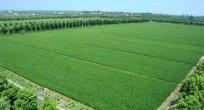 Çin Bütçede Ekolojik Tarıma 90 Milyon Dolar Ayırdı
