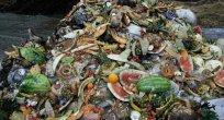 Çin'in yüz ölçümü kadar gıda çöpe gidiyor