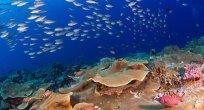 Mercan resifleri yok olmak üzere