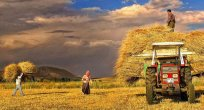 Tarım Üretici Fiyatları Endeksi Ekim'de %1.8 arttı
