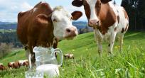 Ticari süt işletmelerince Nisan ayında 899 bin 190 ton inek sütü toplandı